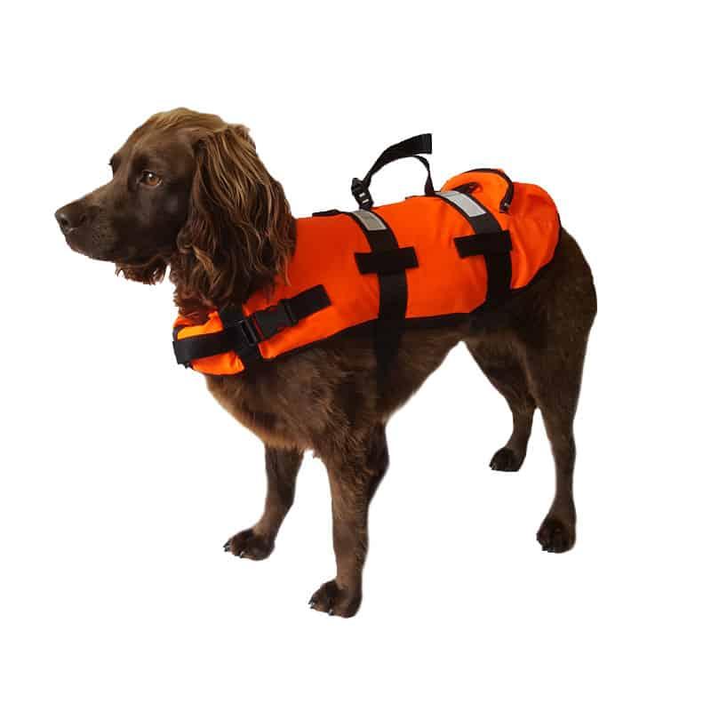 Stock photo of a dog floatation jacket on a dog.