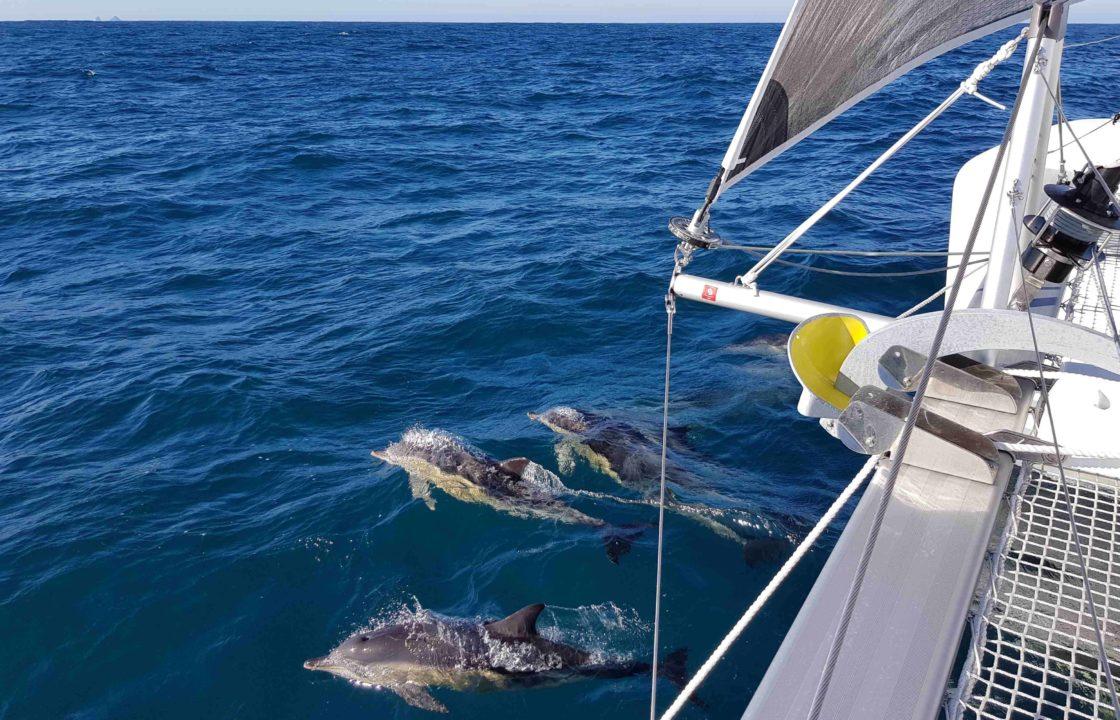 DolphinsonthebowofaLagoonCatamaran