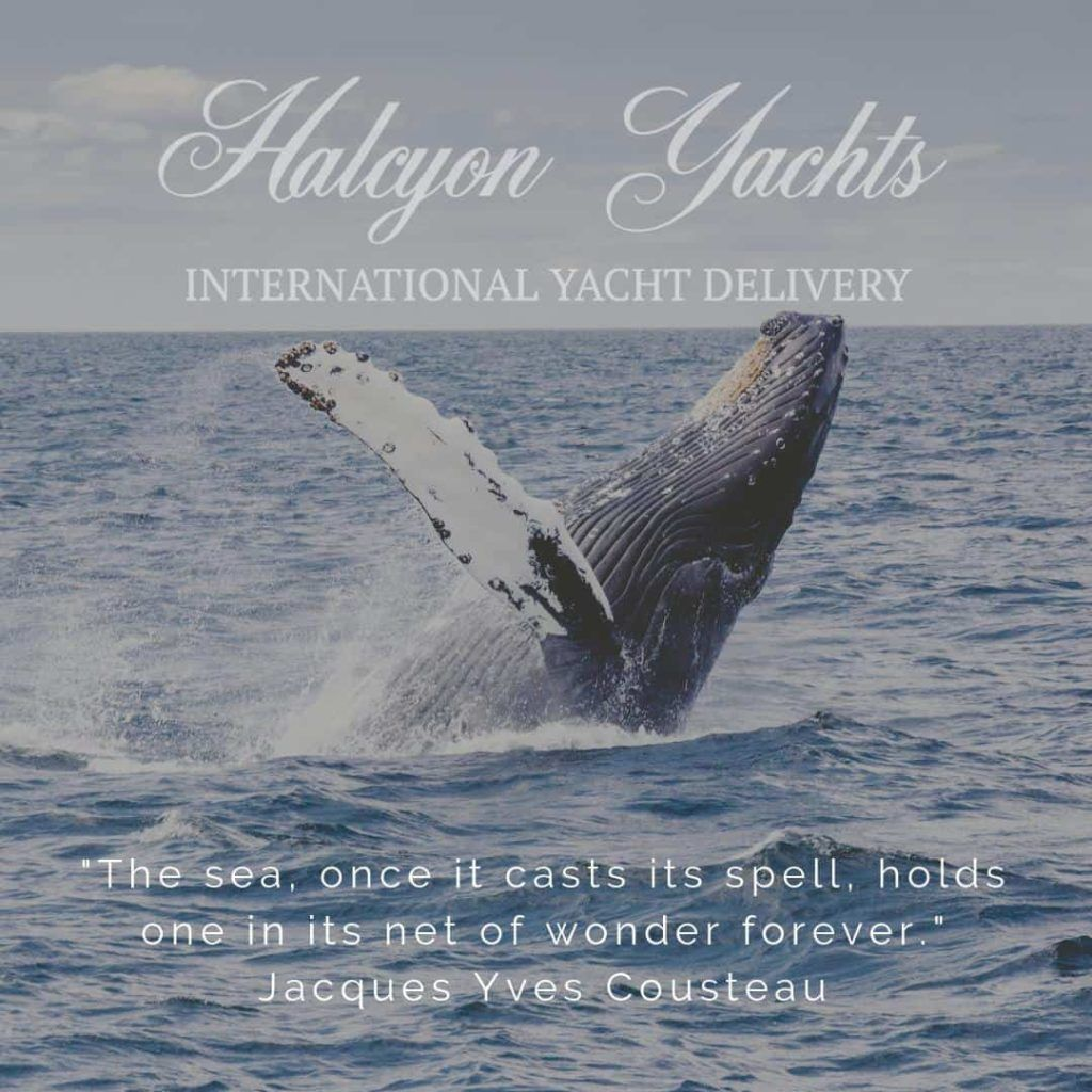 Jacques Cousteau Top Ten Quotes about the Sea
